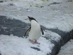 ペンギン空を仰ぐ-02