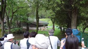 夕暮れ動物園撮影教室